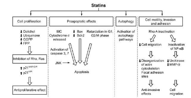常用他汀类药物有哪些 你可能不知道 这些他汀类药物还可以抗癌