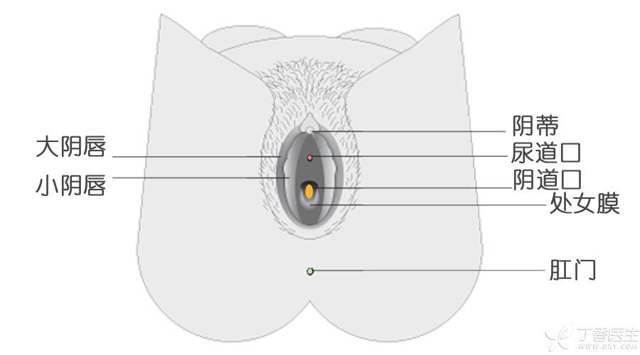 vaginal-area900_color.jpg